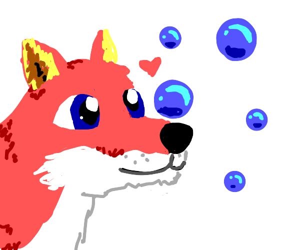 Fox loves bubbles