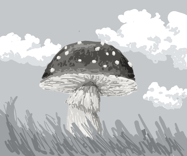 Gray shroom