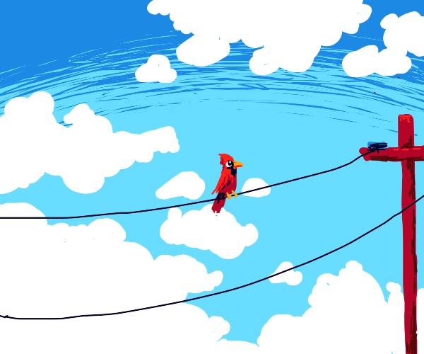 Bird on telephone line