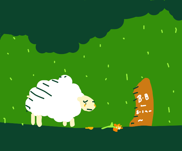 sheep mourning in the rain