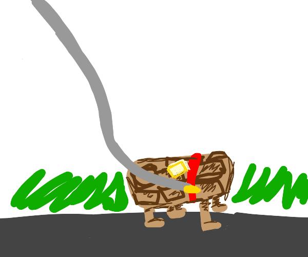 taking my waffles on a walk