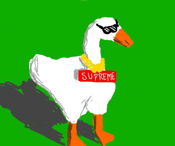 Goose wearing Supreme swag