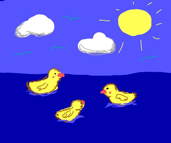 Ducks on the ocean
