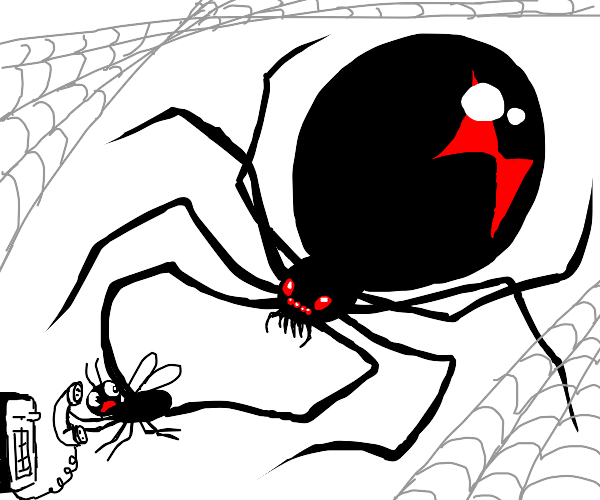 Hello? A black widow is attackng me! Help!
