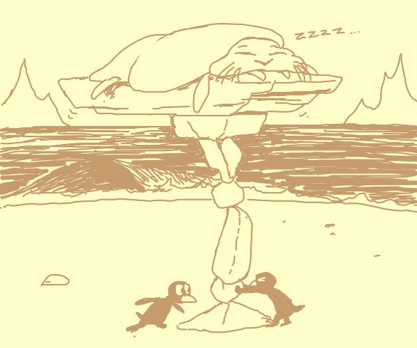 Walrus chilling on a rock