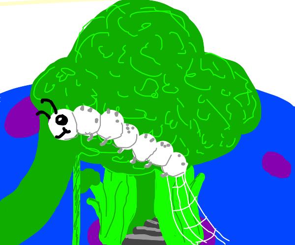 Broccoli Playground