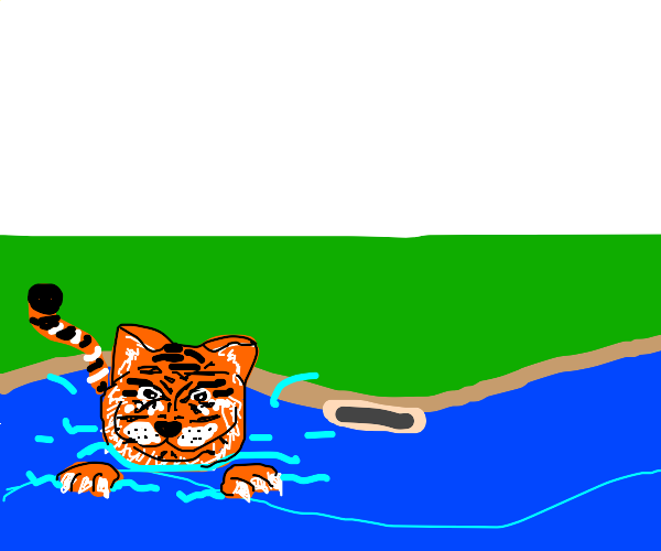 Tiger cat in a pool