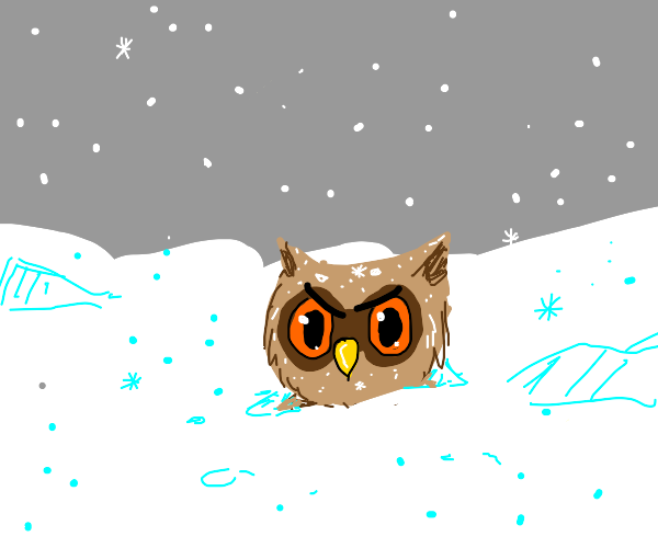 angry owl in snow