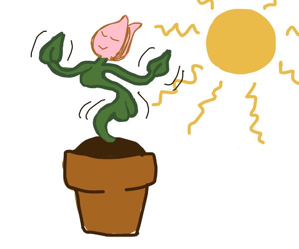 Seductive photosynthesis dance