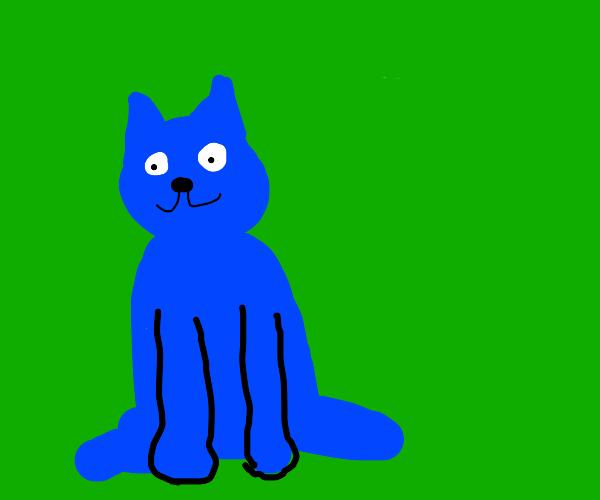 Proud blue kitten