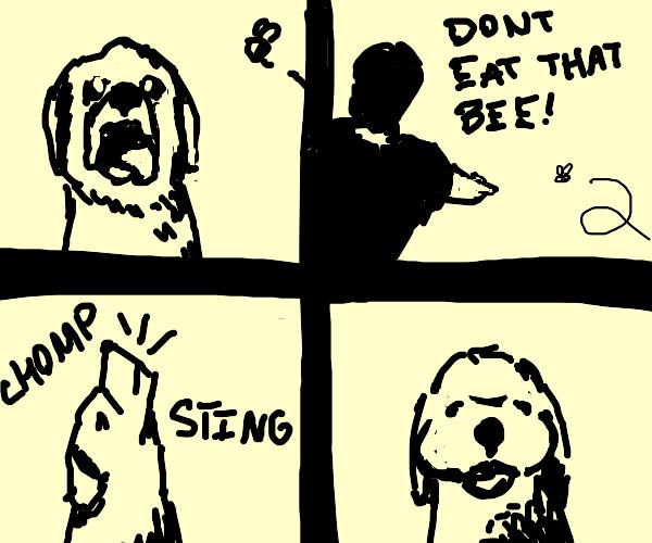 Dog failed to heed man's warning