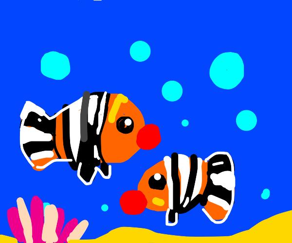 a pair of clown fishs