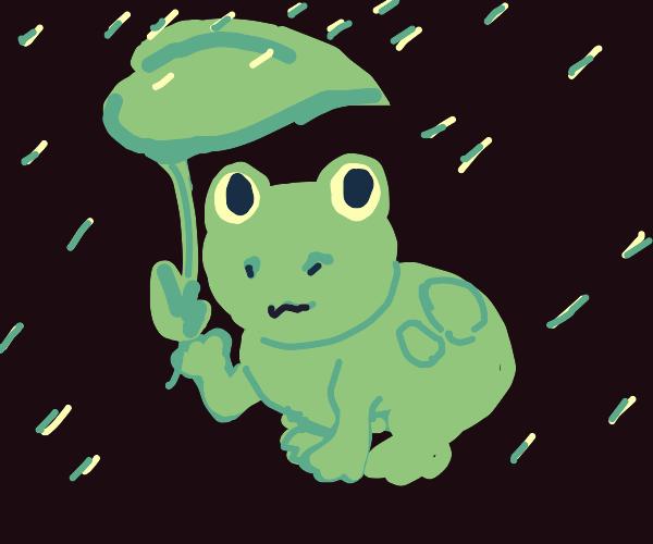 frog using a leaf as an umbrella