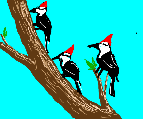 Three colourful woodpeckers up a tree