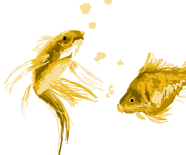 Two goldfish together
