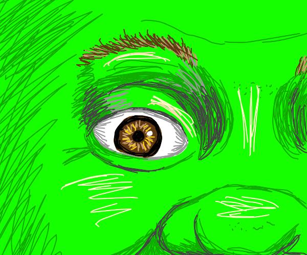 close up of shrek's eye