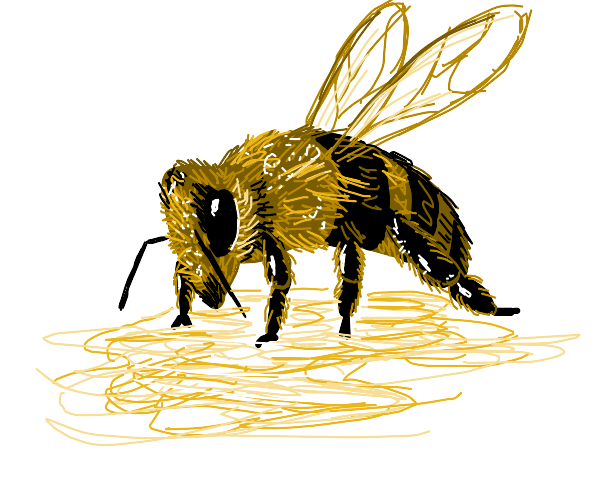 Bee eating honey