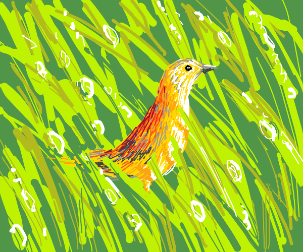 Yellow bird in the dew covered grass