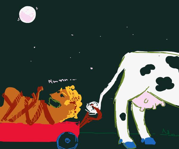 Cow kidnaps man at night