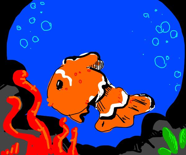 Clownfish in reef