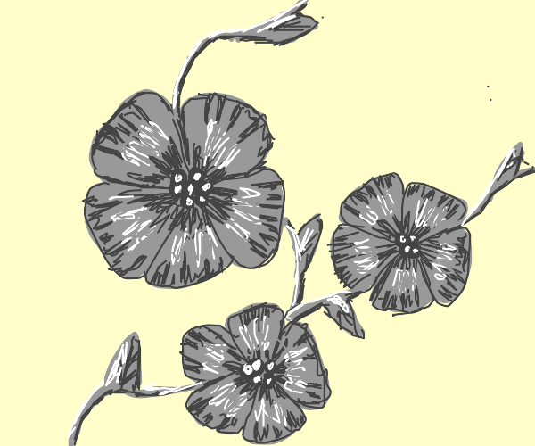 Lovely greyscale flowers