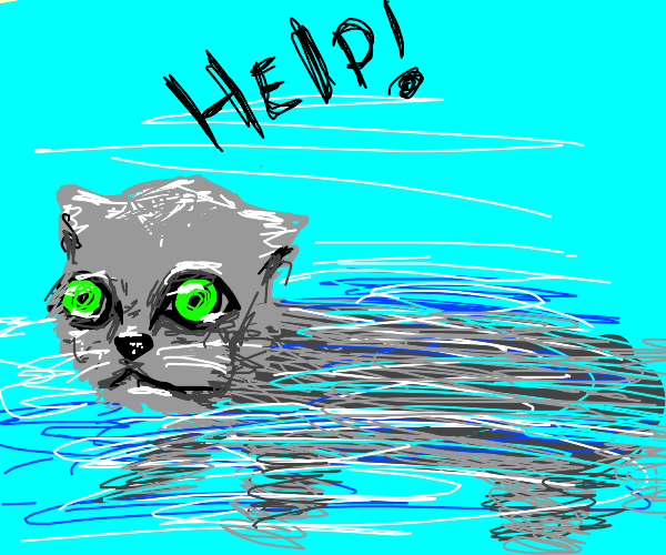 Cat drowning