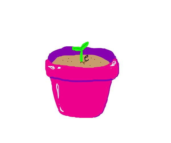 growing a p l a n t e