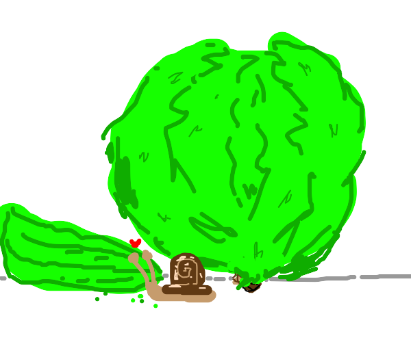 Tiny snail eats big lettuce