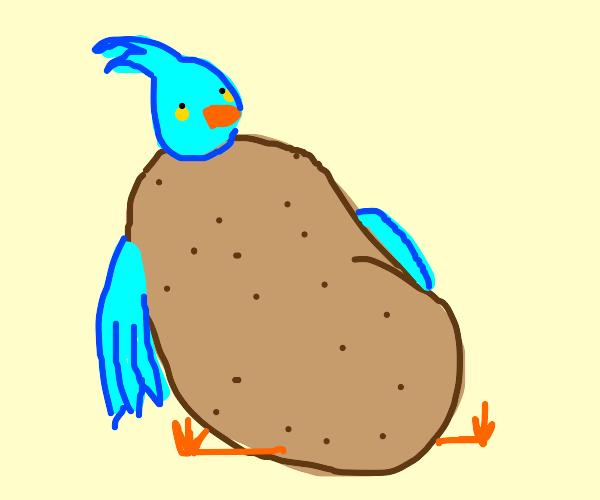 A cute blue bird w/a brown potato-like body