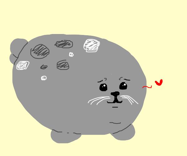 Chonker Seal