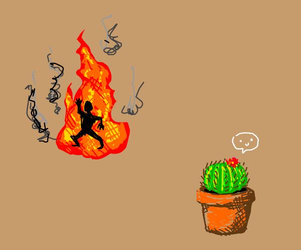 Sadistic cactus watches someone burn