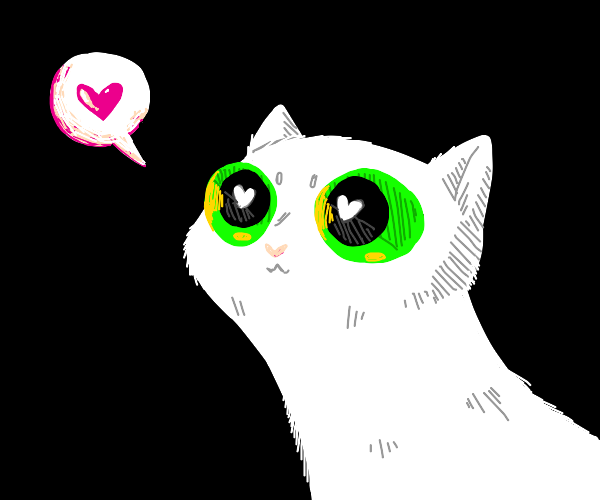 white cat with green eyes is in love