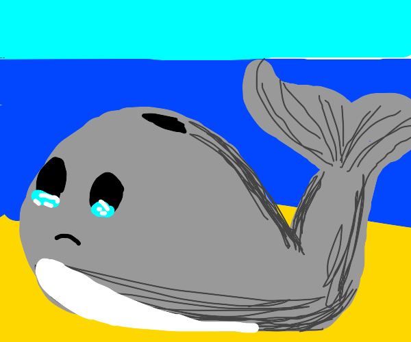 A beached whale