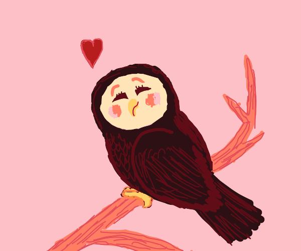 a lovely owl