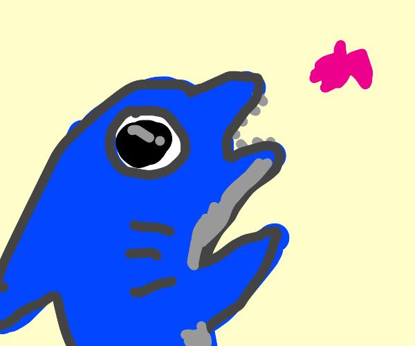 Baby Shark (doo doo doo)