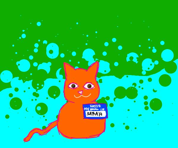 Sarah is a cat