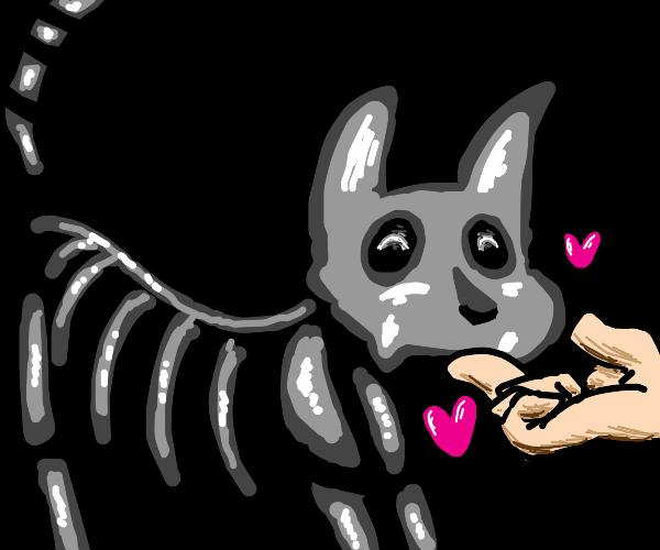 Petting a skeleton cat