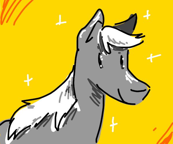 A beautiful gray horse