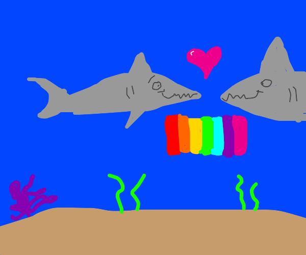 gay sharks in love