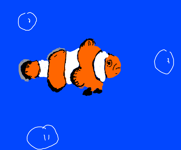 a clownfish in the ocean