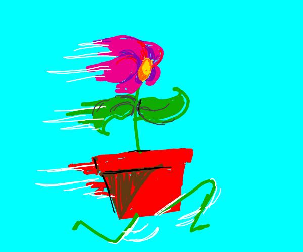 Run away flower