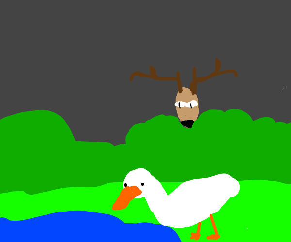 deer spies on duck while its distracted