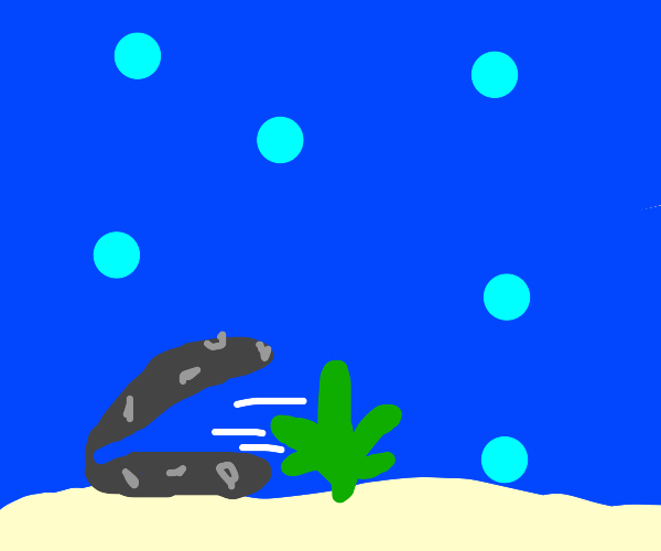 Clam vomiting a Weed