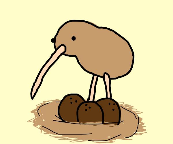 This bird raises coconuts