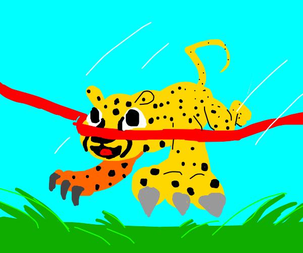 cheetah wins race