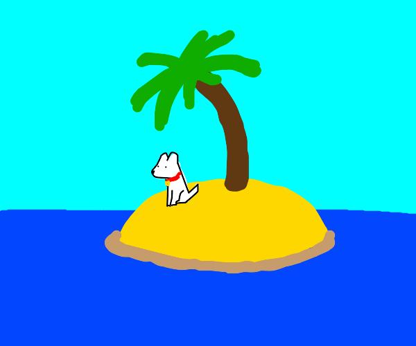 dog stranded on island