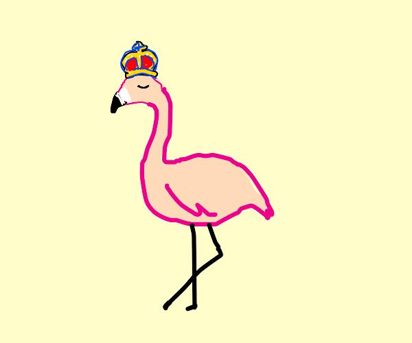 Royal flamingo