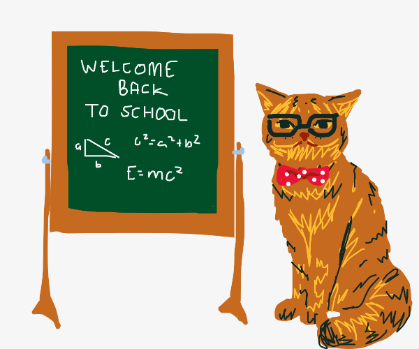 Cat teaching math