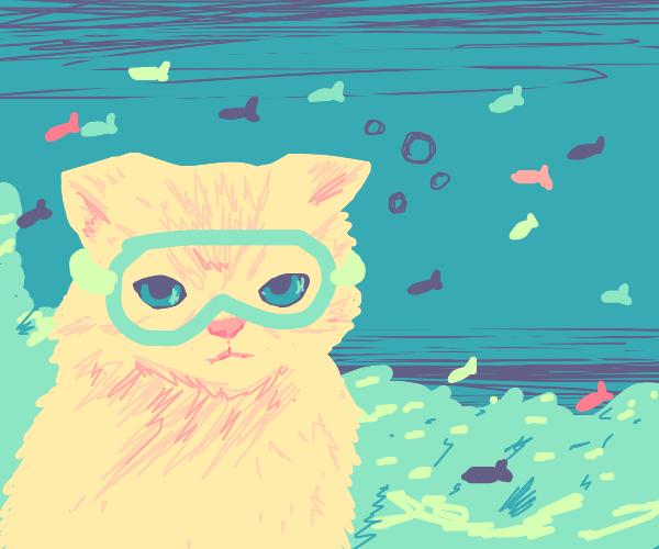 Underwater kitty :3