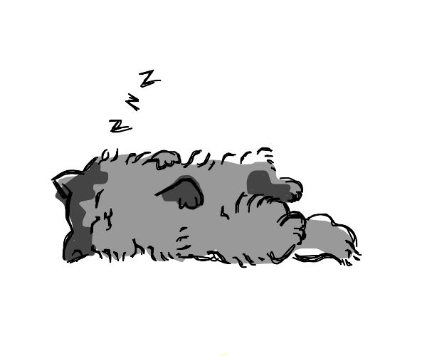 cat going to bed